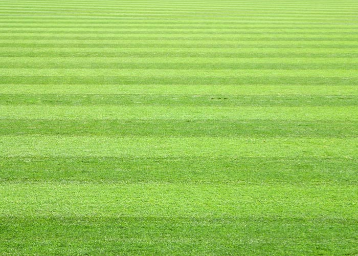 lawn-condition