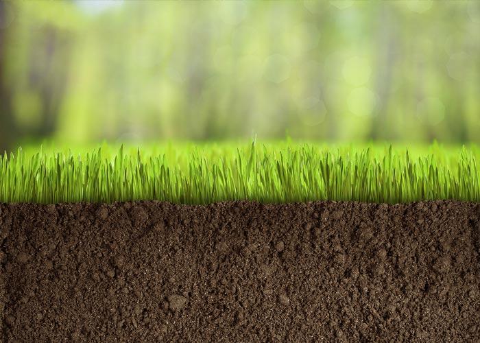 soil-grass